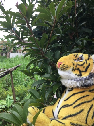 The legendary tiger in Jun's house.